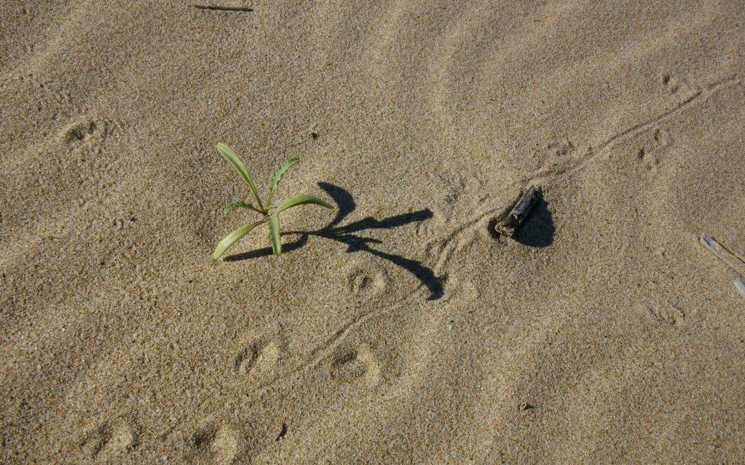 lucertola-sabbia